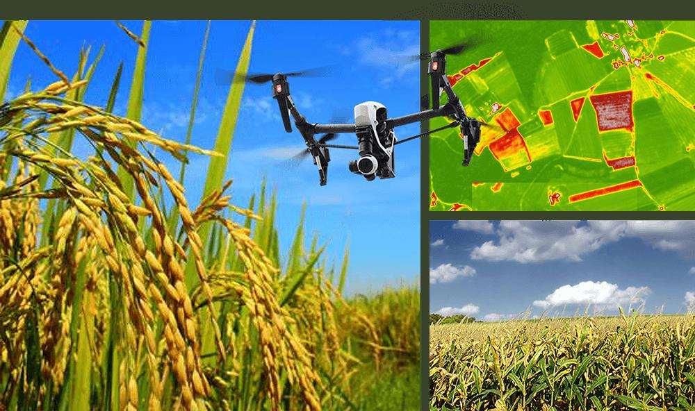 Ứng dụng UAV trong lãnh vực nông nghiệp hiện nay